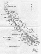 image of bougainville
